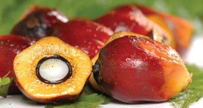 Трудната истина за палмовото масло