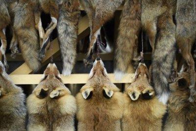 Калифорния забранява дрехи и чанти от естествена кожа