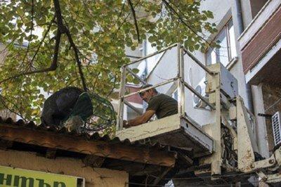 Гигантска игуана свалиха от липа в Стара Загора