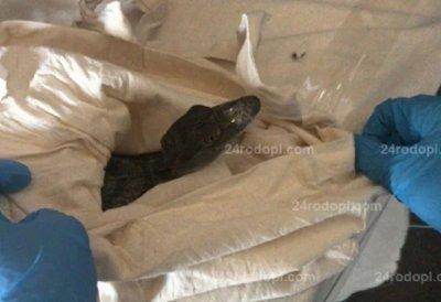 """ШОК! Спипаха нашенец с контрабанден крокодил на """"Капъкуле"""""""