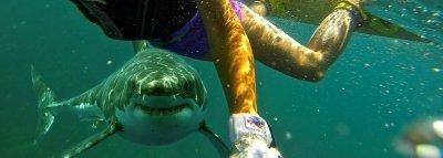 Акула отхапа двете ръце на туристка