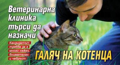 Ветеринарна клиника търси да назначи галяч на котенца