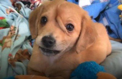 Куче се роди с опашка на челото (ВИДЕО)