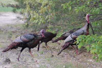 По Хичкок: Зли пуйки нападат хора в Ню Джърси