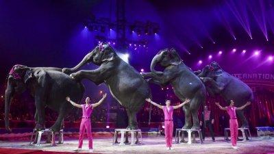 Париж забрани зверовете в цирка