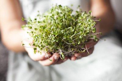 Защо са полезни кълновете от броколи?