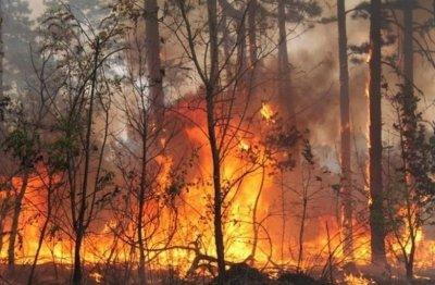 Горски пожар лумна край Трявна