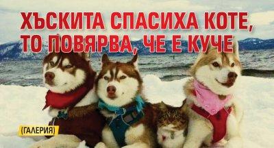 Хъскита спасиха коте, то повярва, че е куче (ГАЛЕРИЯ)
