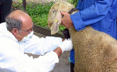 Ветеринари изплакаха пред Lupa.bg: Превръщат ни в пъдари
