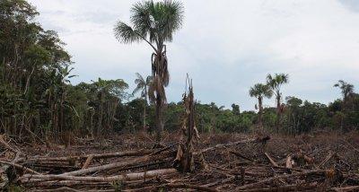 Обезлесяването в Амазония - с рекордно ниво от 11 години