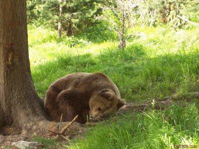 """Шествие """"Оставете мечките да спят!"""" в новогодишната нощ"""
