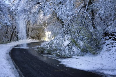 Франция в снежен хаос, дърво уби мъж