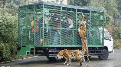 В китайски зоопарк хората са в клетки (ВИДЕО)