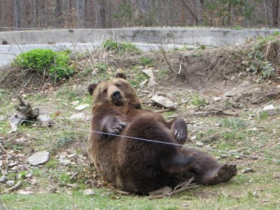 Болният мечок Веско си има нов дом