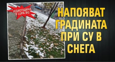 Идиотщина в Lupa.bg: Напояват градината при СУ в снега