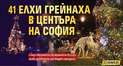 41 елхи грейнаха в центъра на София (СНИМКИ)
