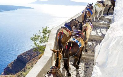 Нов закон брани магаретата на Санторини