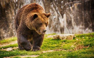 Туристите да внимават, над 16 мечки бродят на Витоша