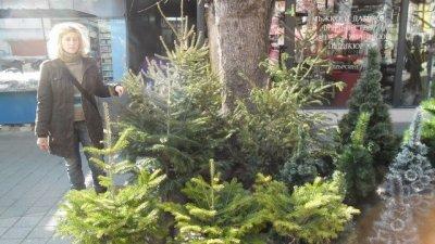 Спипаха 310 незаконно отсечени елхи в София