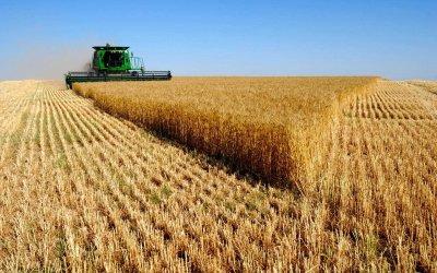 Климатичните промени обричат зърнопроизводството
