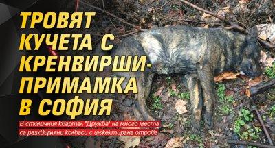 Тровят кучета с кренвирши-примамка в София
