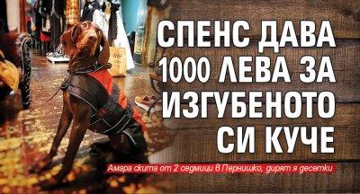Спенс дава 1000 лева за изгубеното си куче