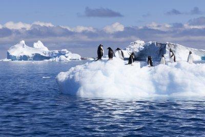 Антарктида смалява човешкия мозък