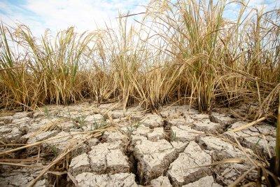 Климатичната криза - най-голямата глобална заплаха след Втората световна война