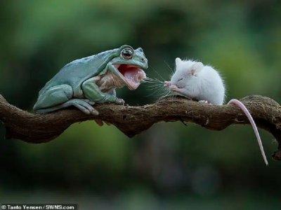 """Приятелство: Жаба """"помилва"""" мишка и получи целувка (СНИМКИ)"""