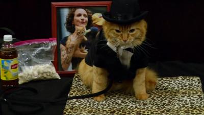 Ветеринари: Не обличайте котките си