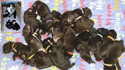 Мери Джейн роди естествено 21 кученца