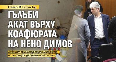 Само в Lupa.bg: Гълъби акат върху коафюрата на Нено Димов