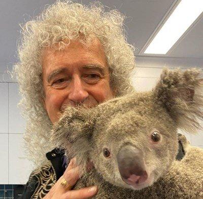 """Брайън Мей от """"Куин"""" свири на китара на спасена от пожарите коала"""