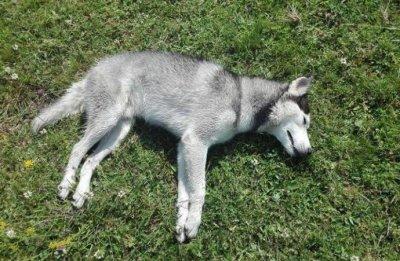 Злобна баба уби кучето на съседката