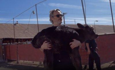 Хоакин Финикс спаси крава с теленце (ВИДЕО)