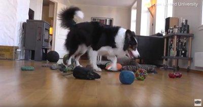 Умник! Куче знае имената на 90 играчки (ВИДЕО)
