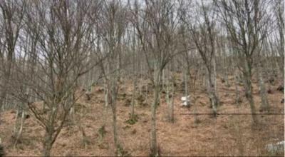 Изчезналите под връх Ботев баща и син загинали още първата нощ