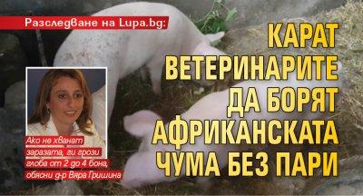 Разследване на Lupa.bg: Карат ветеринарите да борят африканската чума без пари