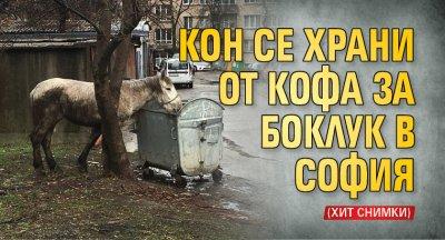 Кон се храни от кофа за боклук в София (хит снимки)