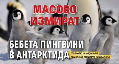 Масово измират бебета пингвини в Антарктида