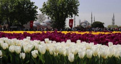 570 000 лалета цъфнаха на исторически площад в Истанбул
