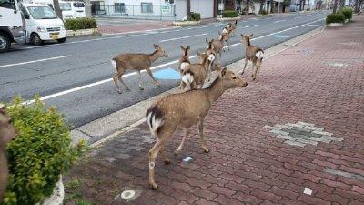 В условията на изолация животни се настаняват в градовете