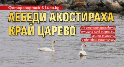 Фоторепортаж в Lupa.bg: Лебеди акостираха край Царево