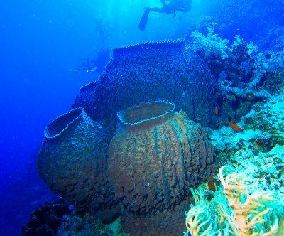 Вещество от морски гъби убива рака