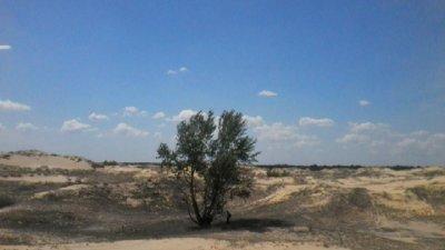 2050 г. - държави опустяват заради жегата