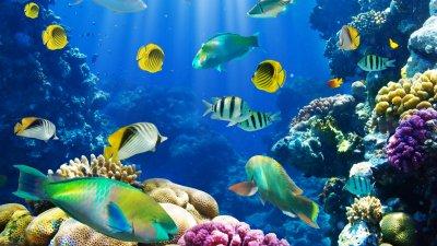 Рибите могат да виждат цветовете на дълбочина 1500 м под водата