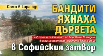 Само в Lupa.bg: Бандити яхнаха дървета в Софийския централен затвор