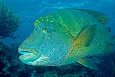 Рибите страдат заради Covid-19