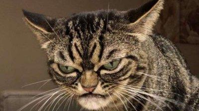 """Появи се нова """"сърдита котка"""" (СНИМКИ)"""