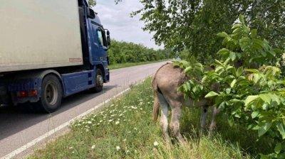 Бито и вързано до пътя магаре застраши хиляди шофьори на пътя Казанлък - Стара Загора